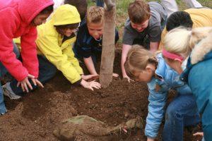 image of planting tree